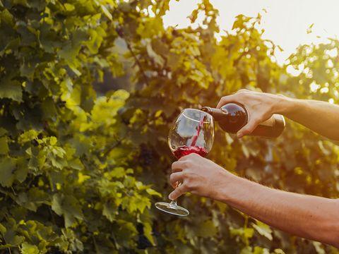 Weinverkostung im Kellerstöckl
