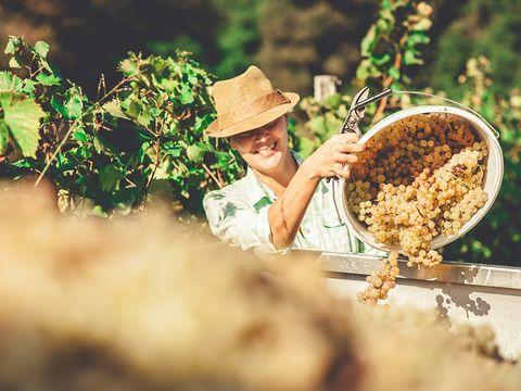 Weinlese mit Jause im Weingarten