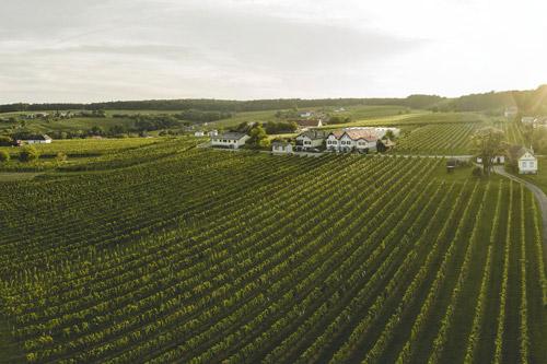 Weingarten in der Weindiylle