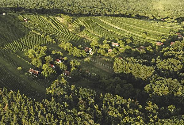 Csaterberg Weingärten