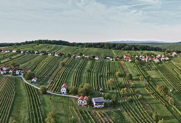 Csaterberg Weingarten